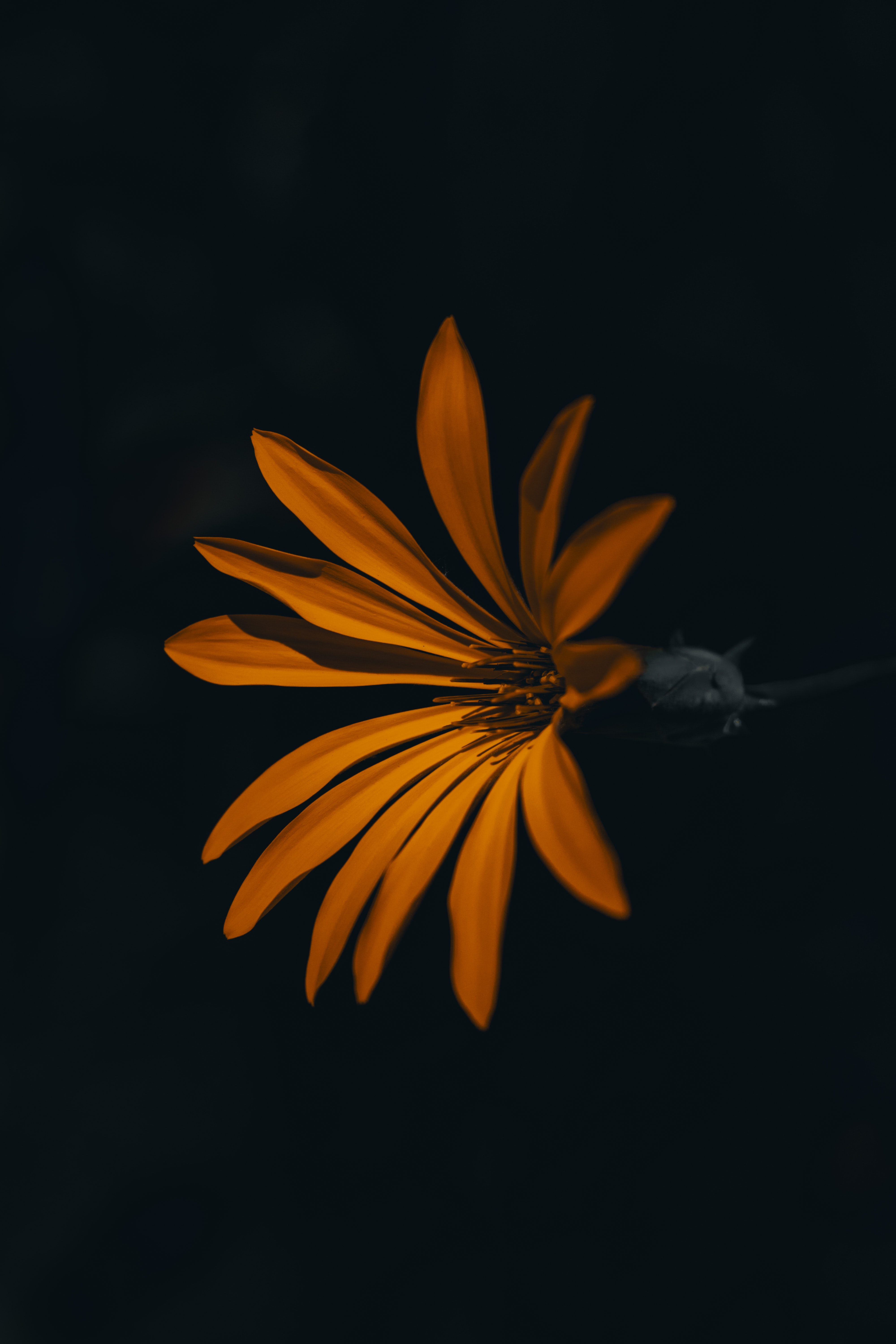 orange flower blooming in the dark