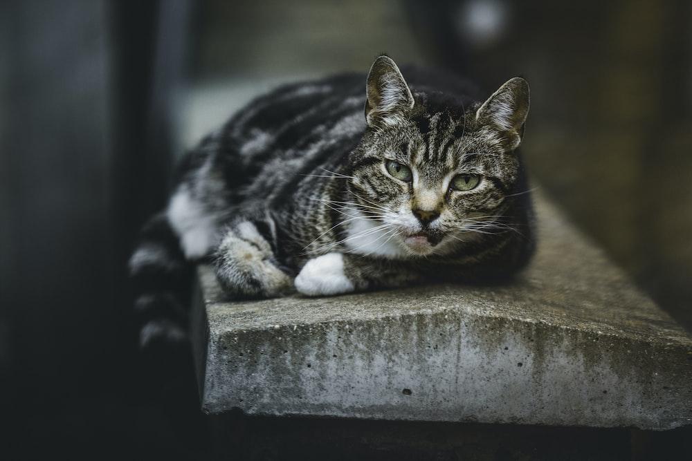 black and gray cat lying on gray concrete platform