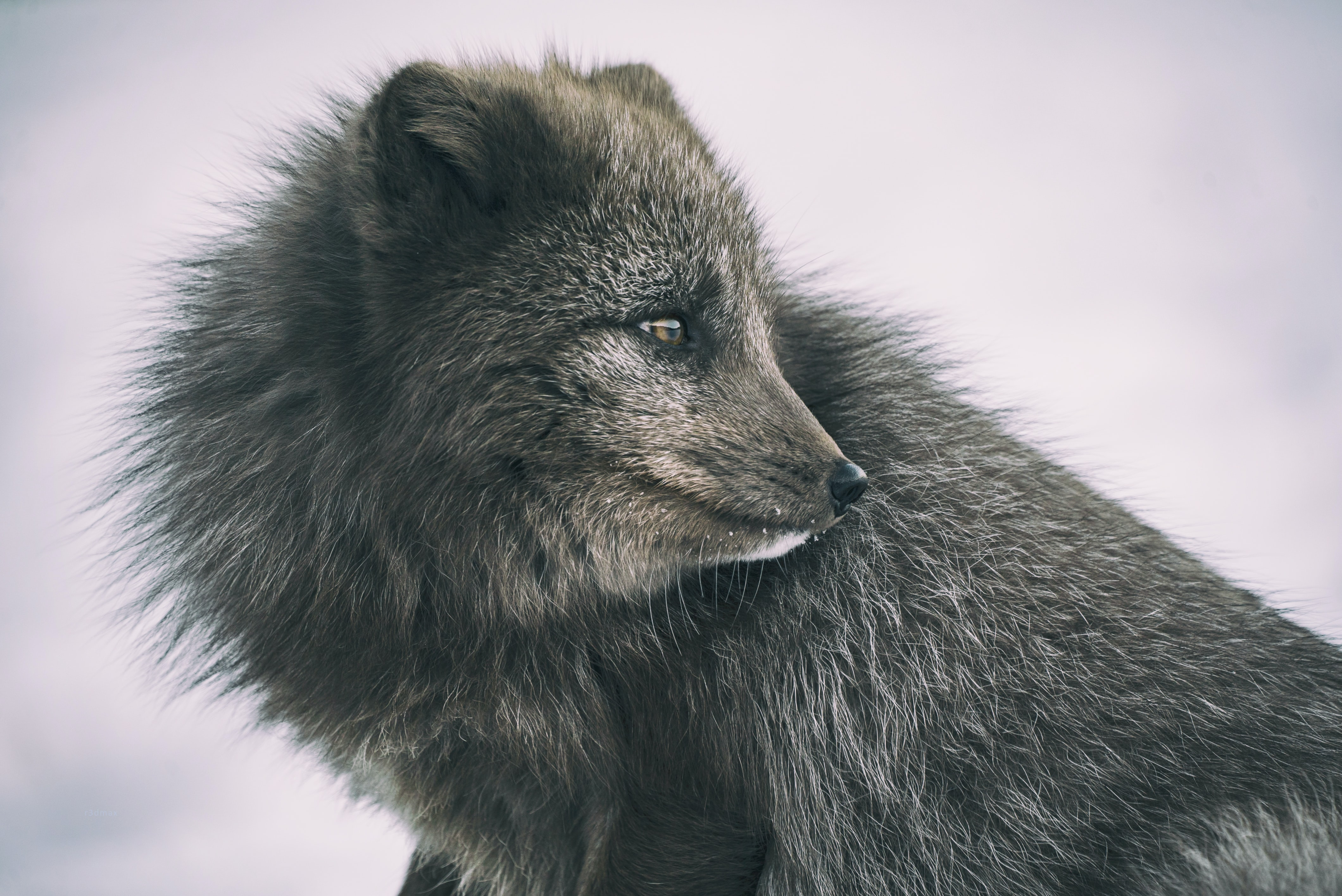 close-up photography of gray animal