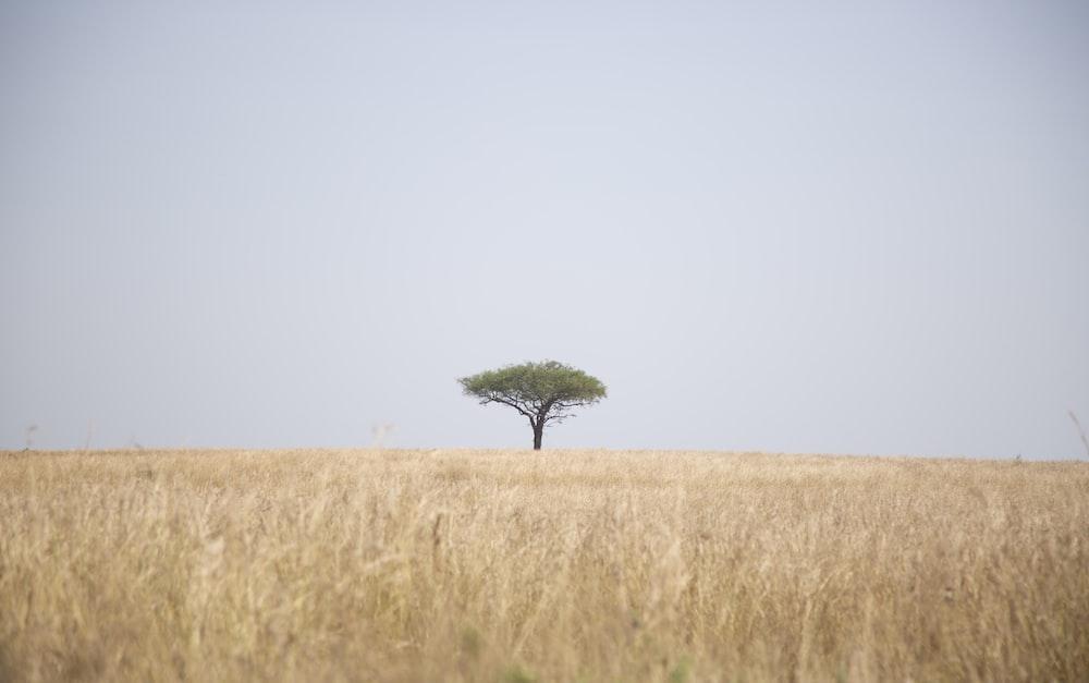 tree beside field of grass