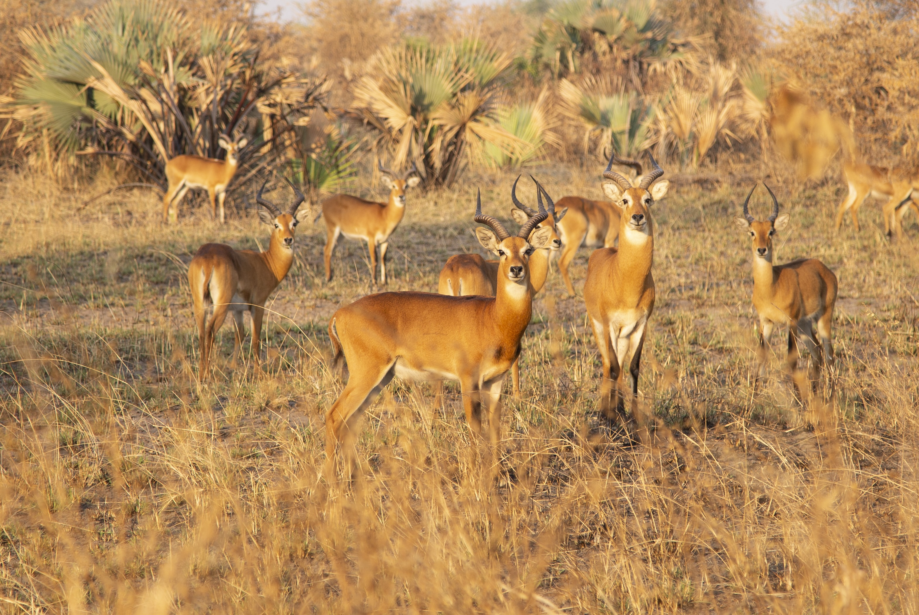 group of antelopes on field during daytime