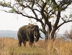 Kibale Forest National Park - Queen Elisabeth National Park