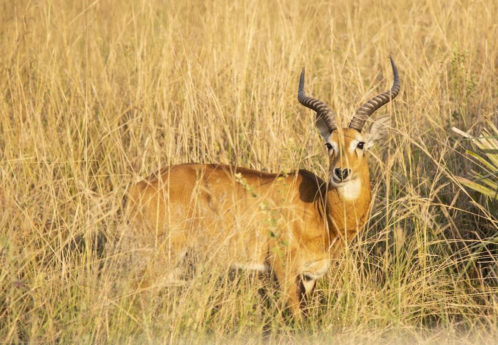 brown deer on grass field at daytime