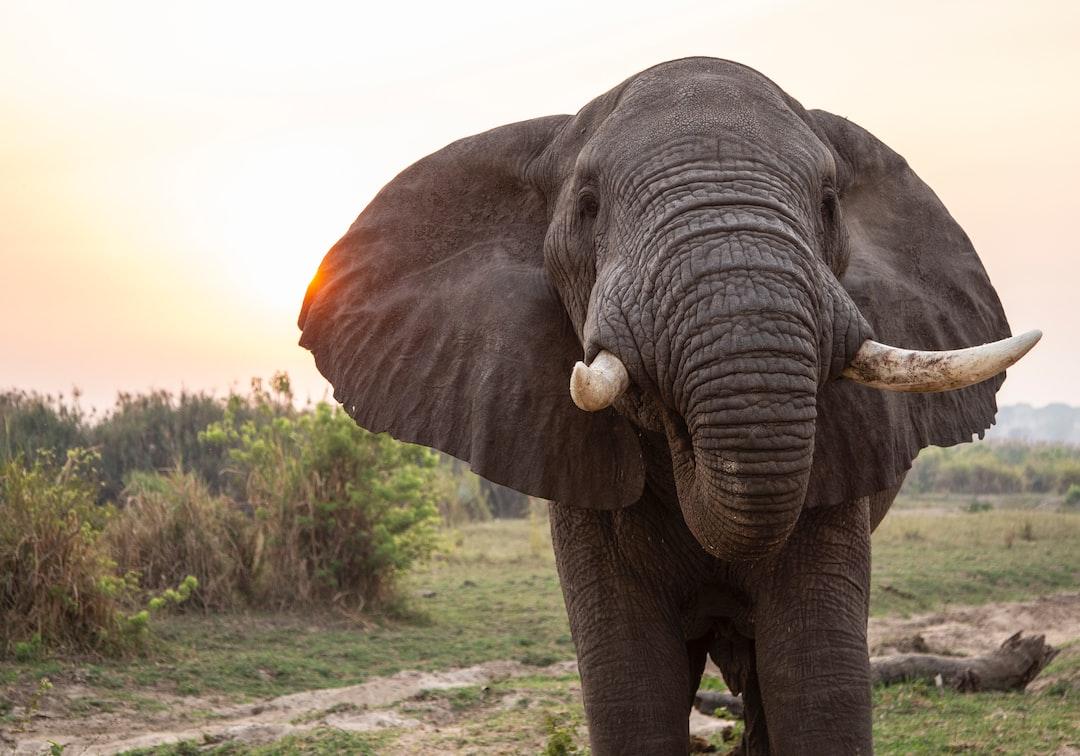Elephant and sun