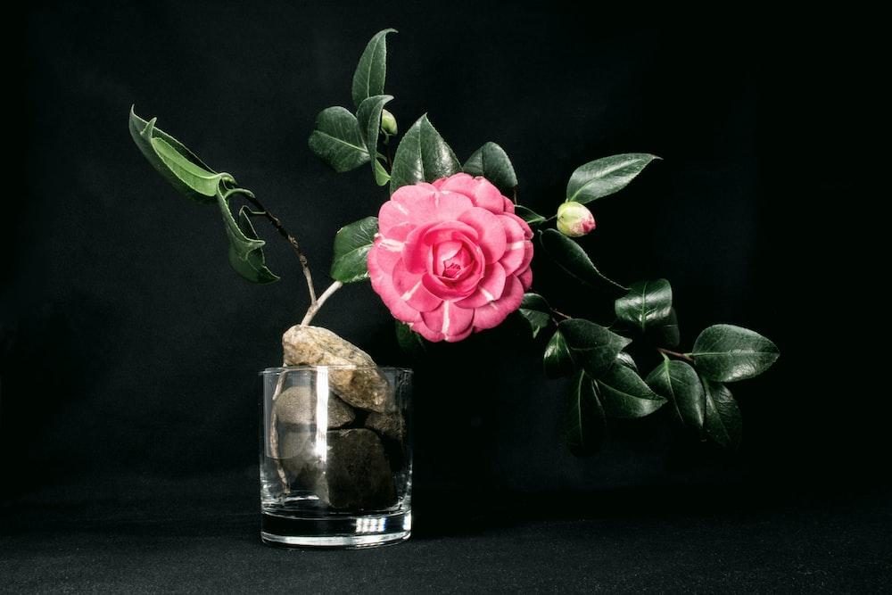 pink-petaled flower on glass