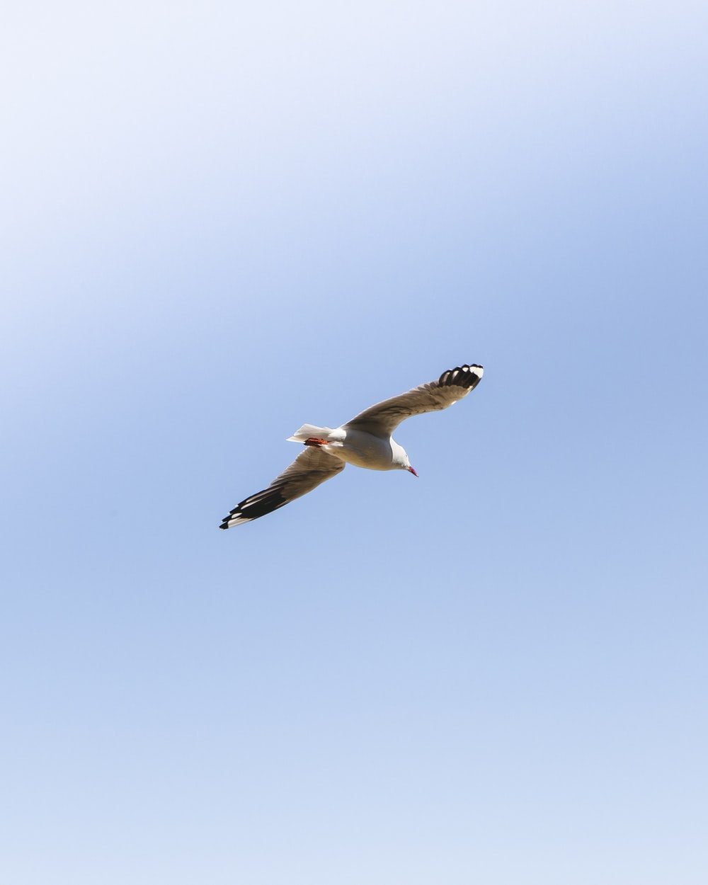 low angle view of seagull flies