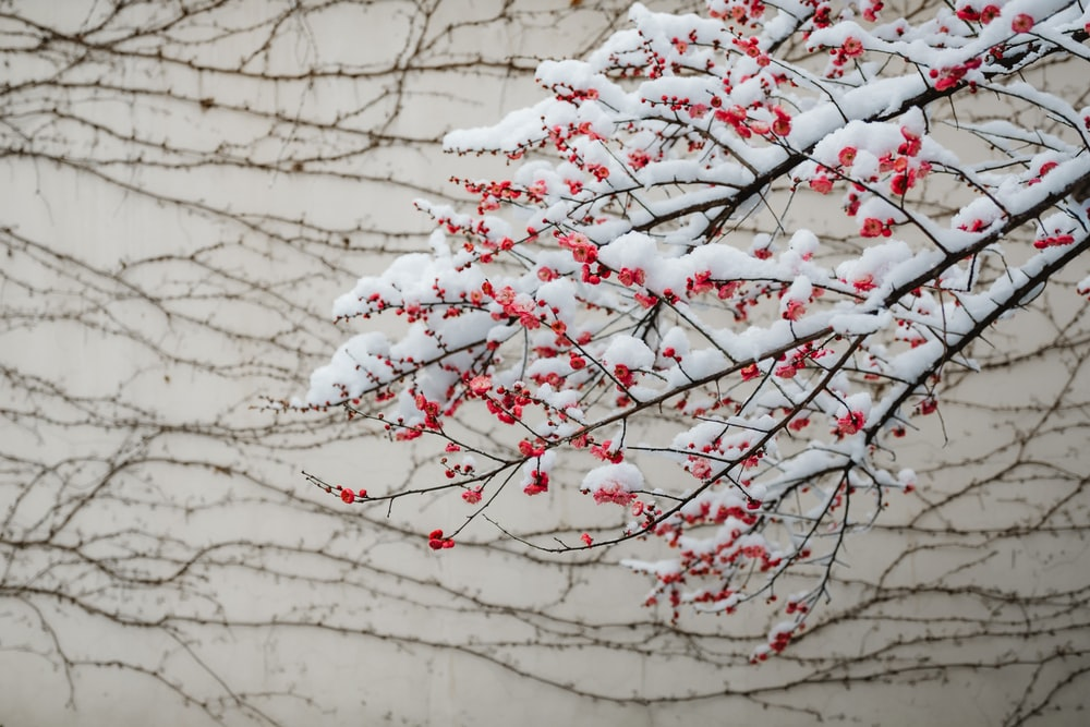 petaled flower filled with snow