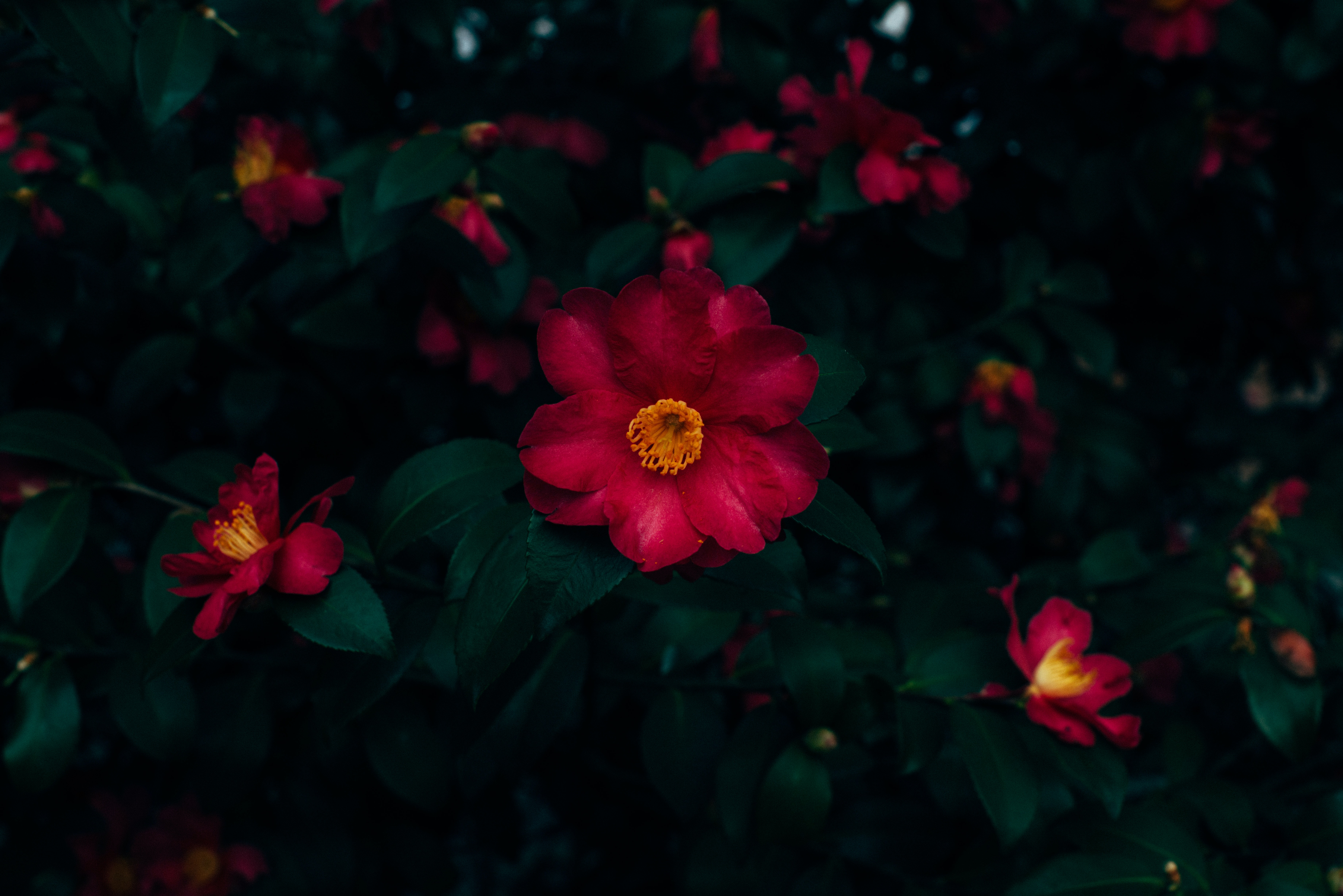 red-petaled flower bloom close-up photo