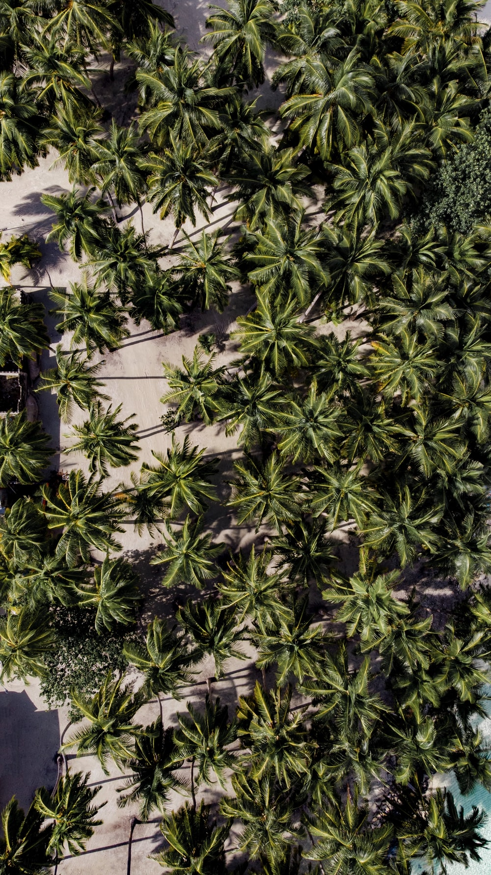 aerial view of palm tree