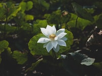 selective focus photography of white-petaled flowers during daytime