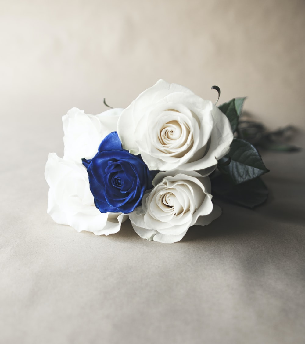 white and blue roses on white surface