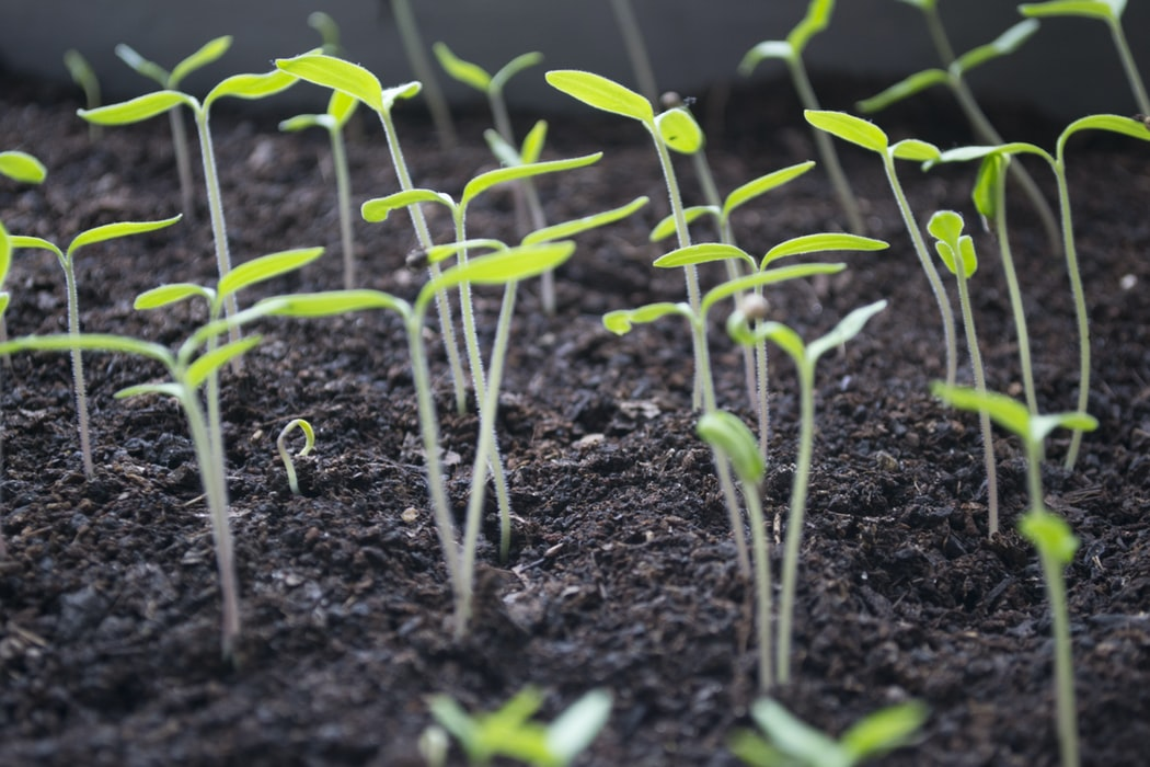 How To Grow Brussels Sprouts From Seeds | Garden Season Ideas