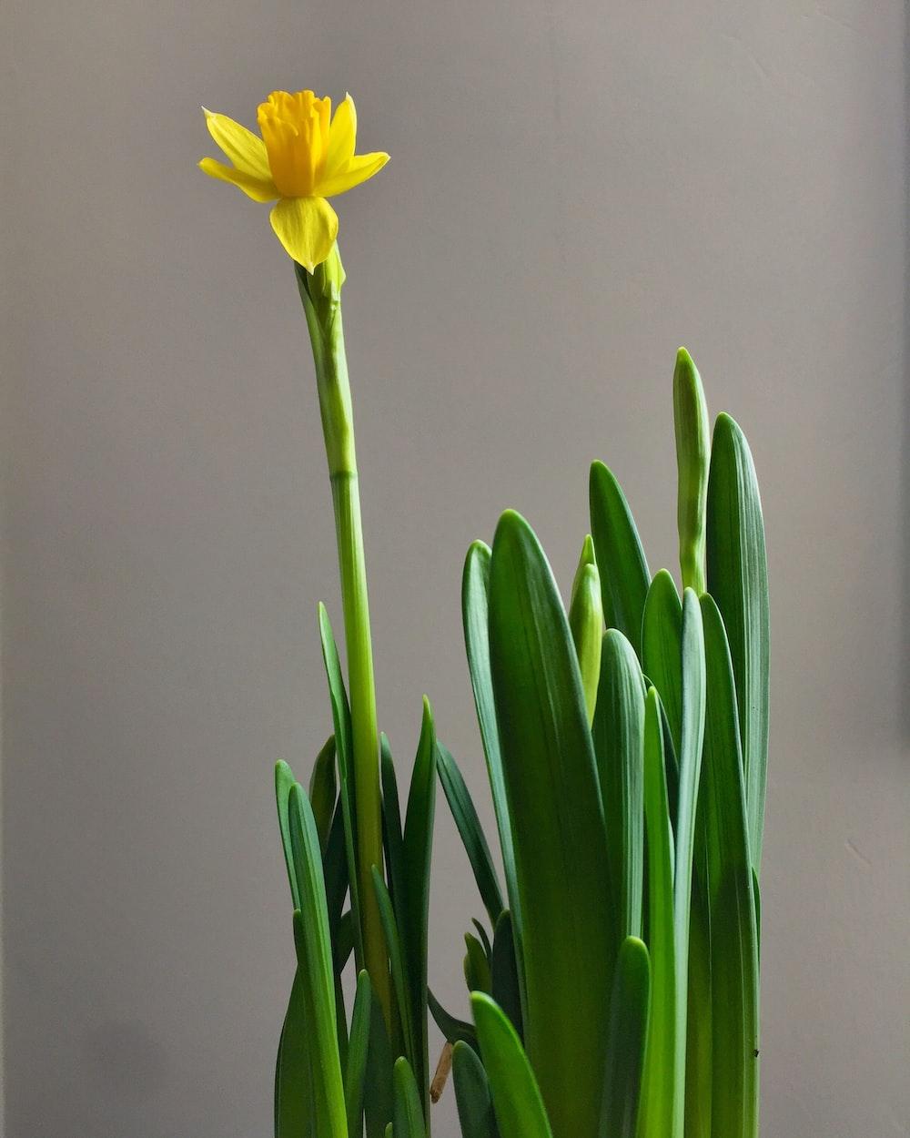 yellow petaled flower close up photo