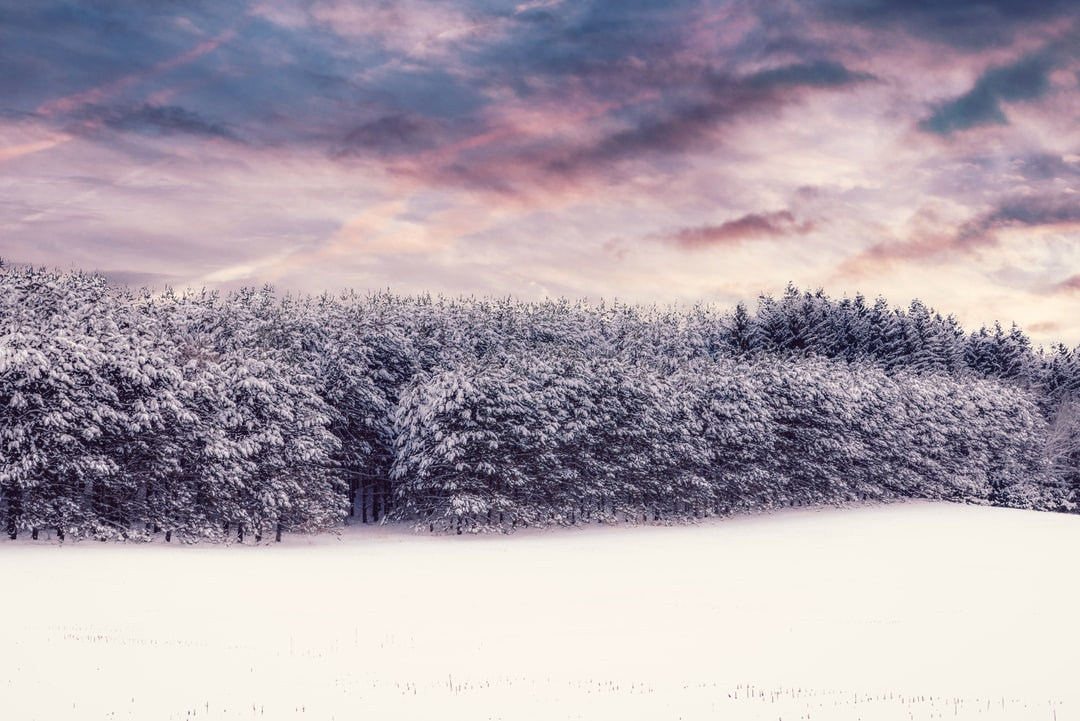 trees with snow during winter <b>season</b> photo – Free Nature Image on ...
