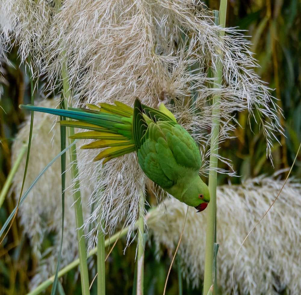Do You Know About Pampas Grass?