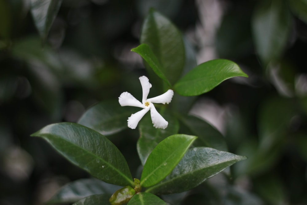 white petal flower with green leaf