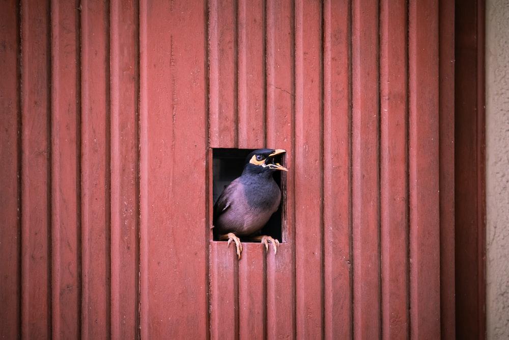 brown bird perched on door during daytime