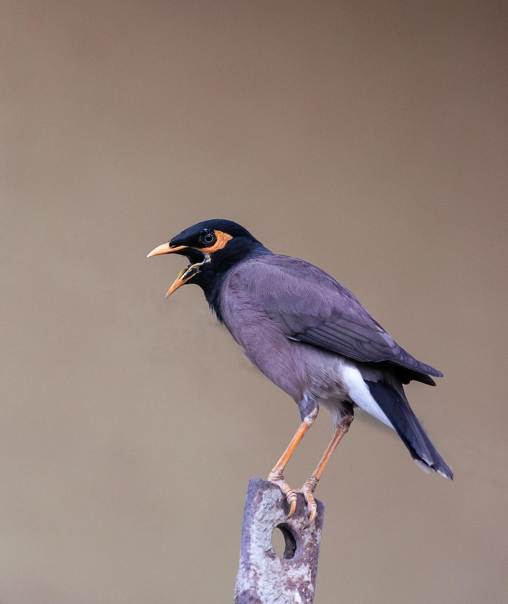 gray bird perching on brown metal part