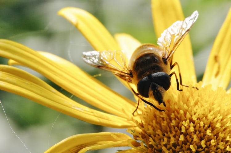 картинки трудолюбивые пчелы многих