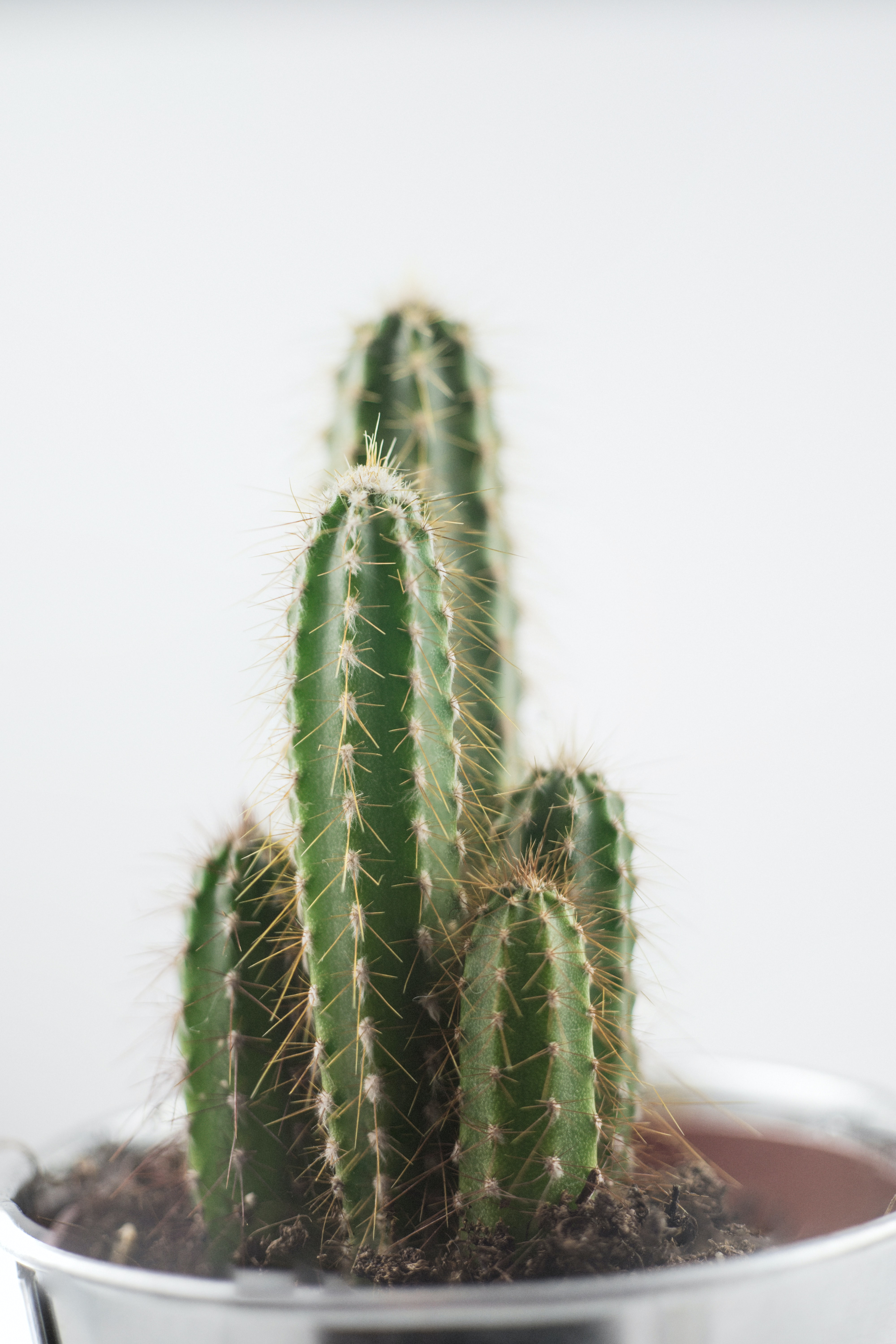green cactus plant on white pot