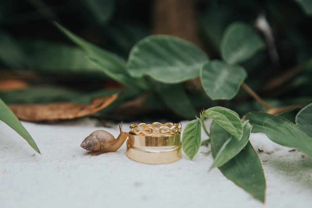 gold-colored ring near brown snail