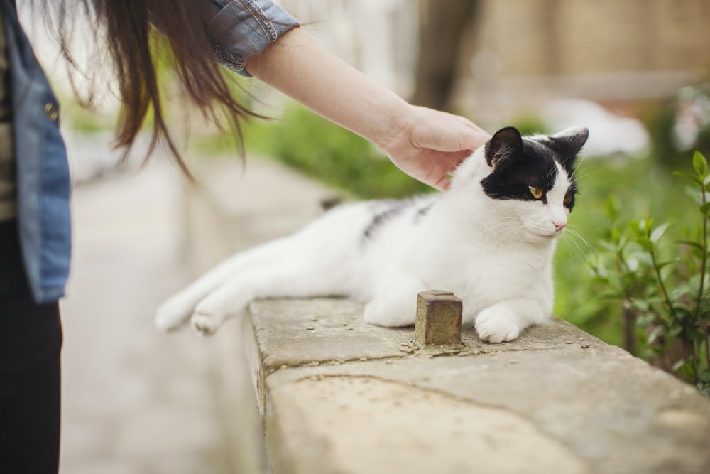 white cat lying on concrete bench while holding of woman