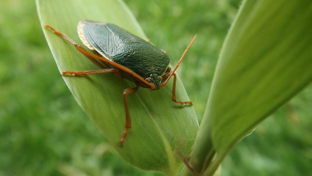 black beetle on leaf
