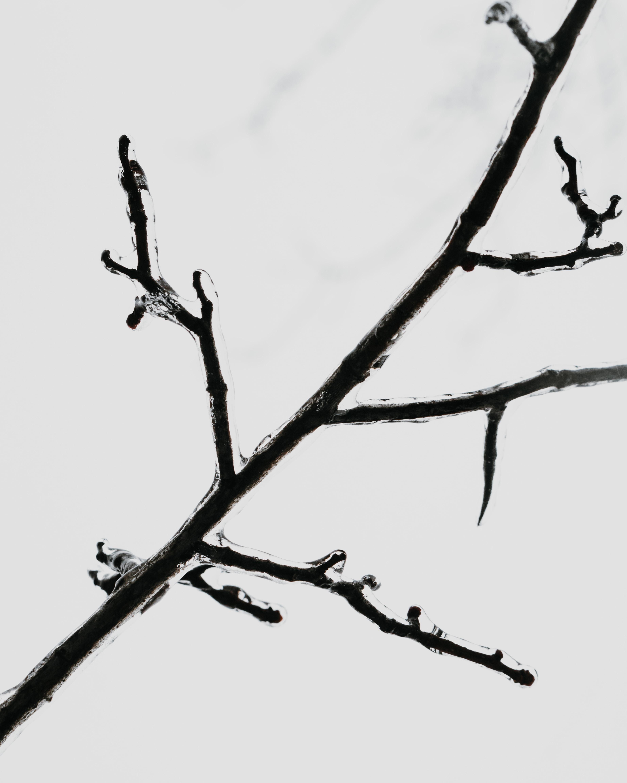 black tree stem