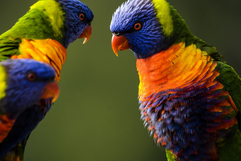 three multicolored birds in close-up photography