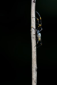 black and gray spider