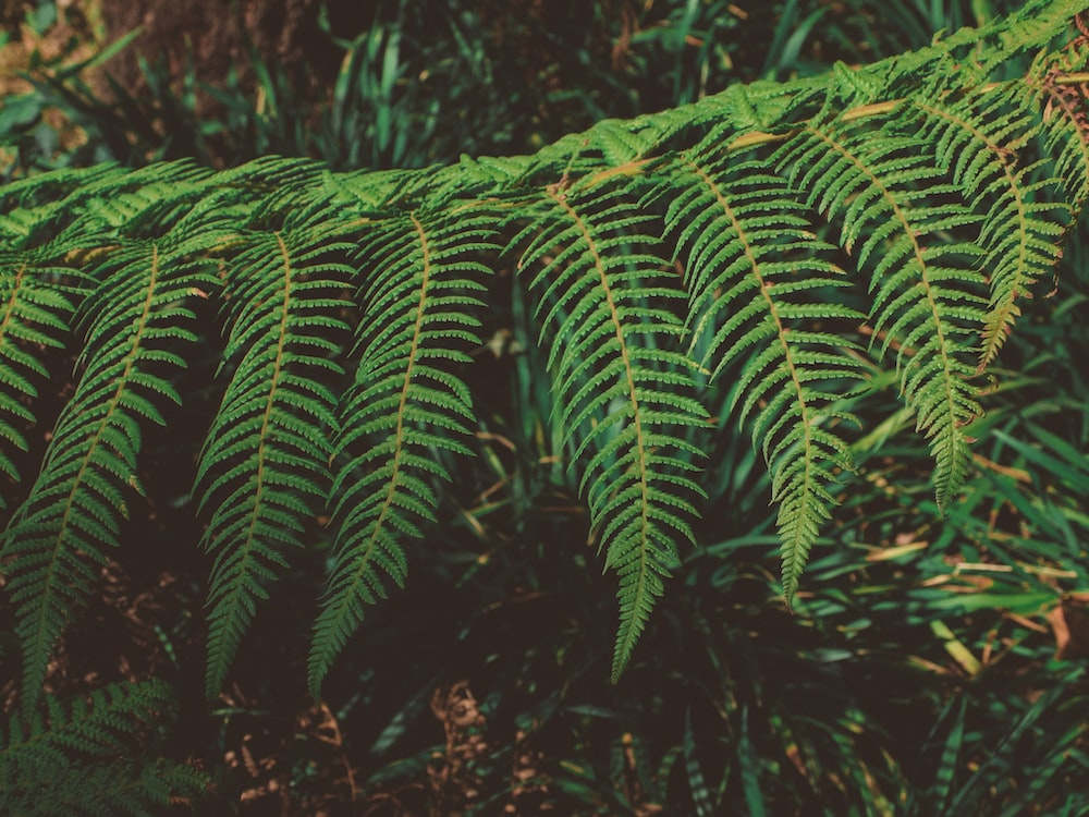 selective focus photography of fern plant