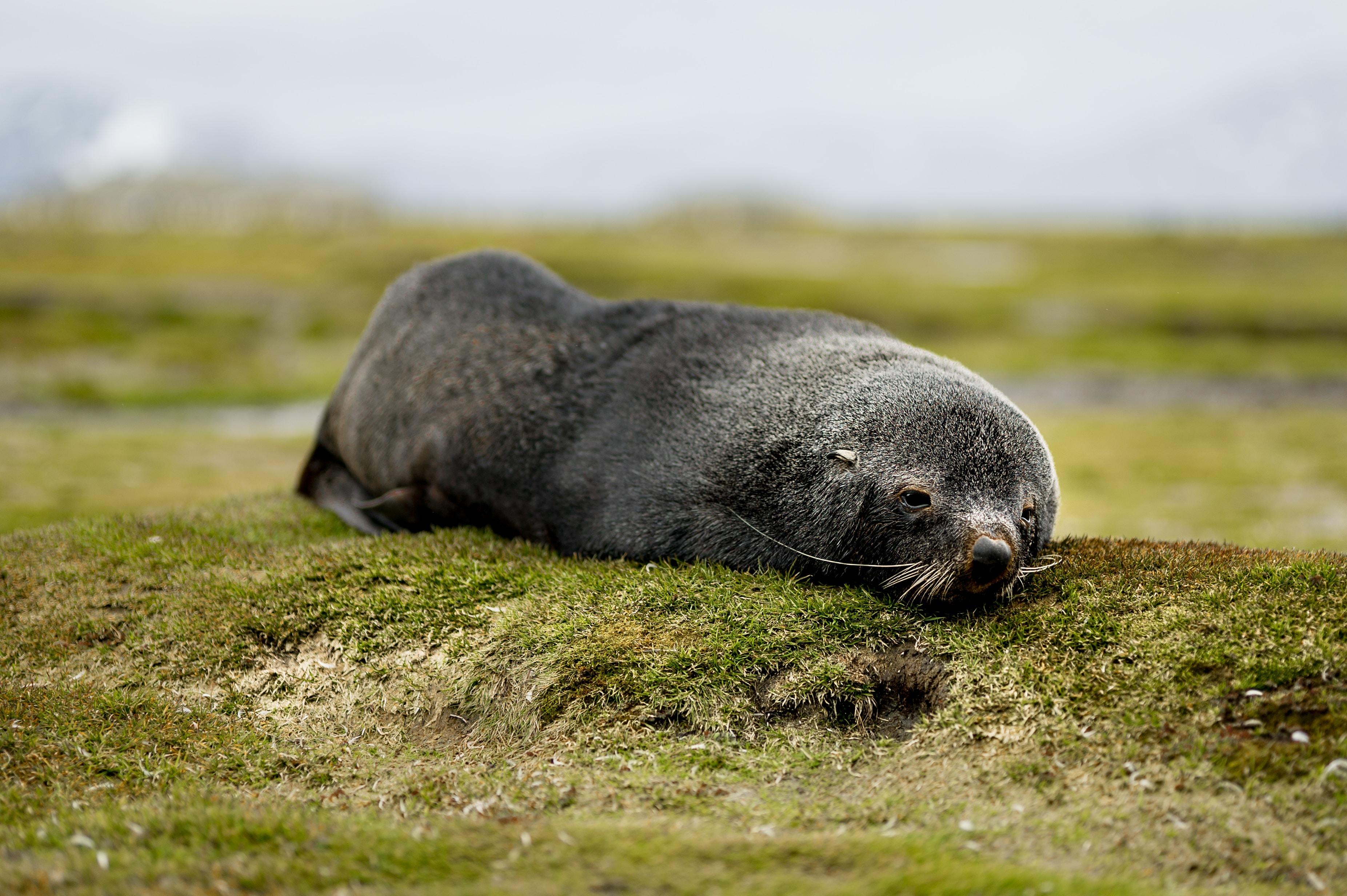 black animal lying on ground