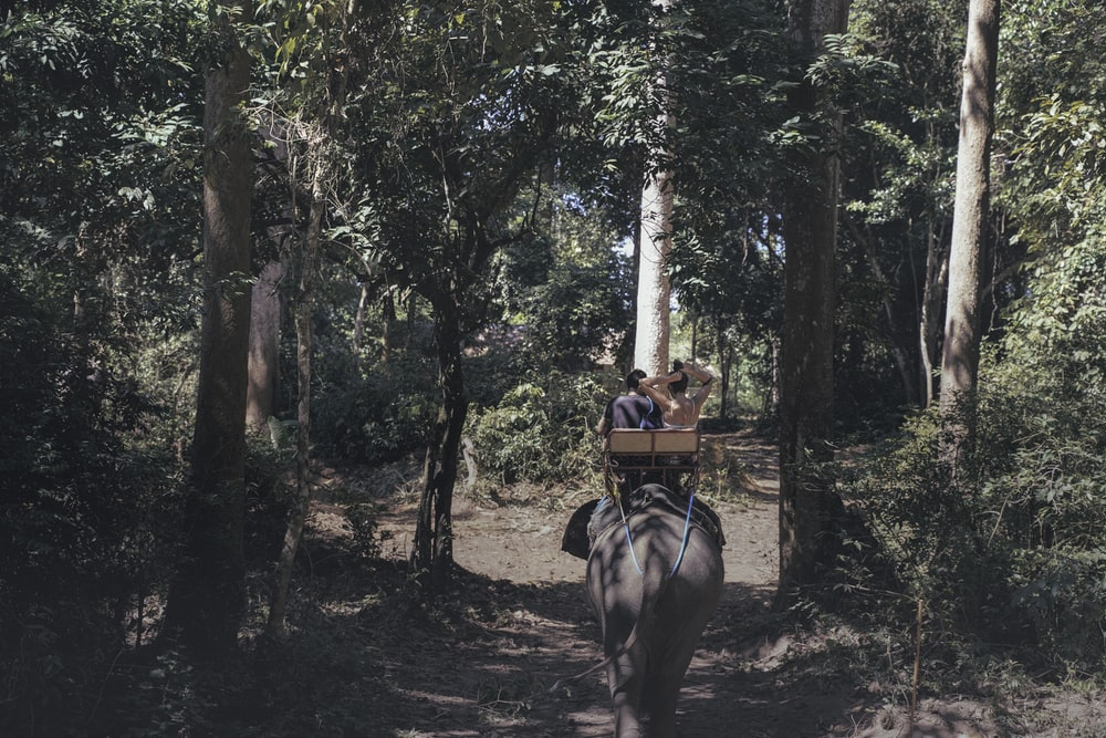 two person riding elephant on forest