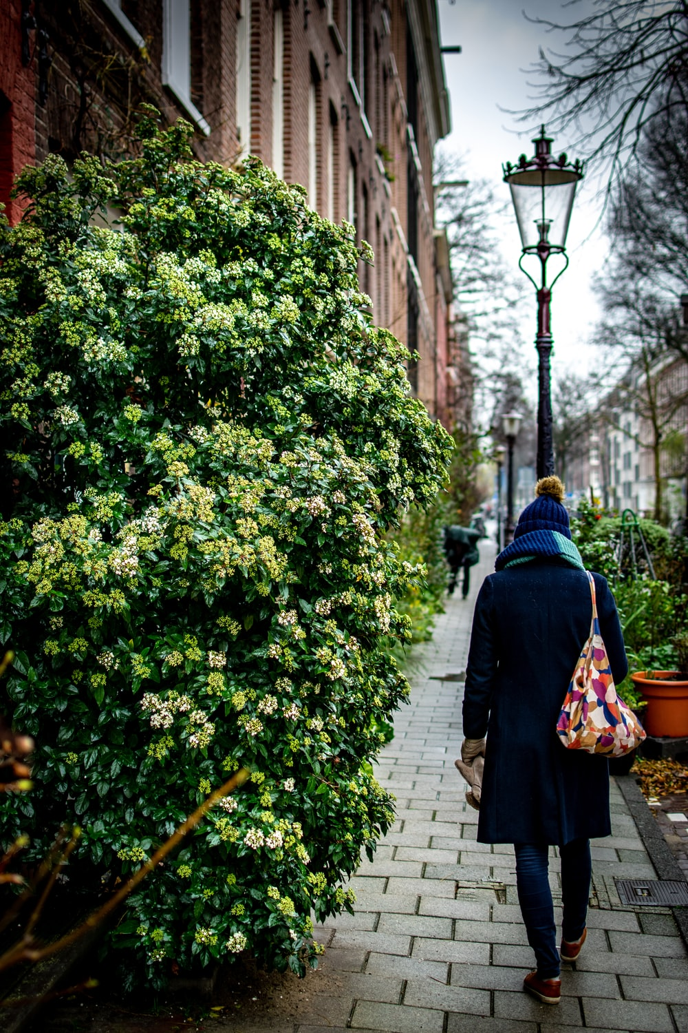 person walking on pathway beside green-leafed plants