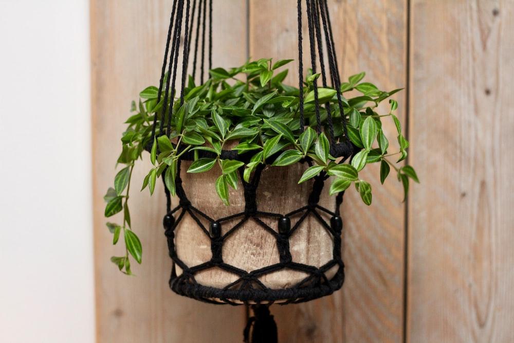 Hanging Basket Pictures Free