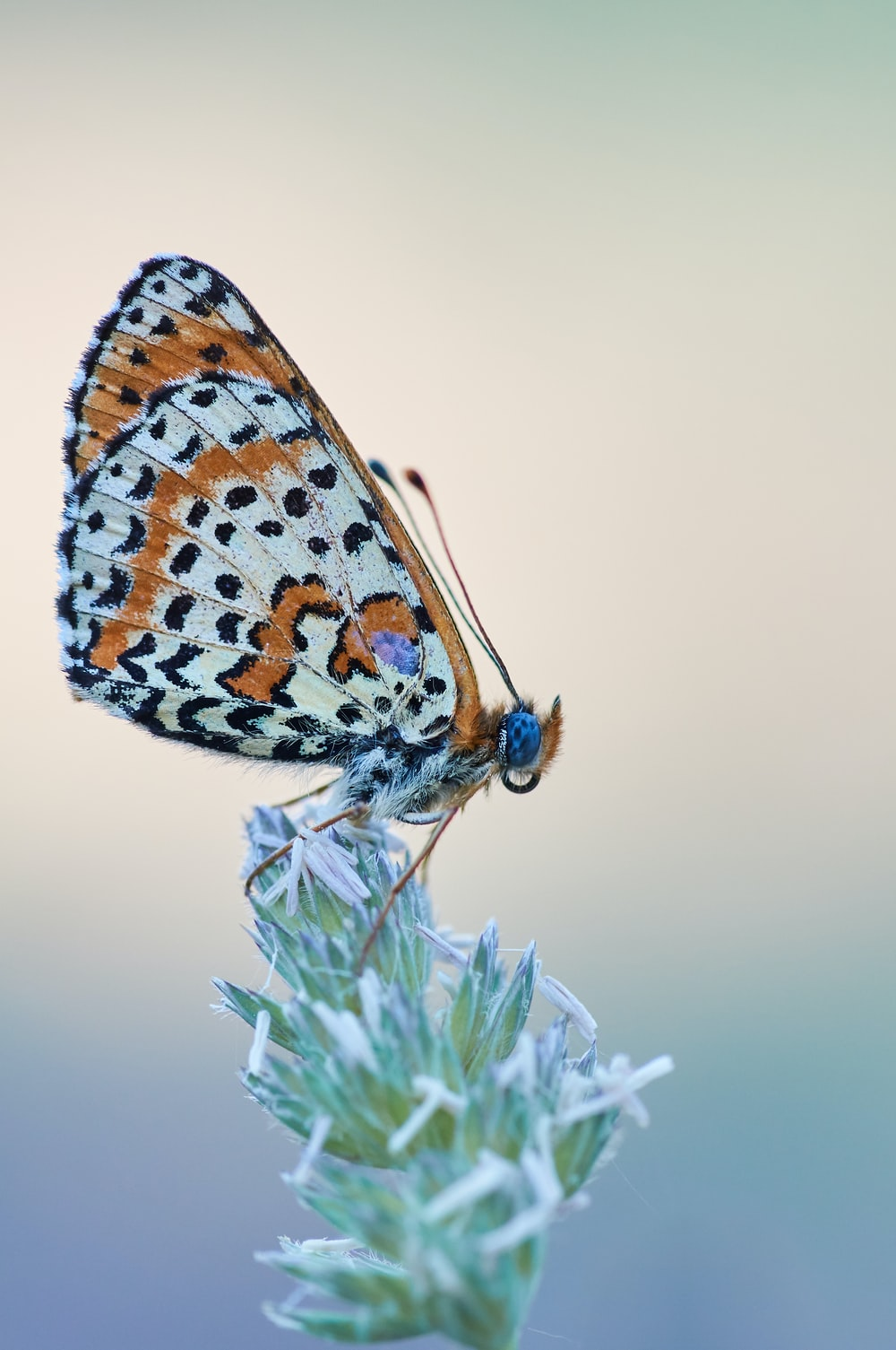 900 Butterfly Images Download Hd Pictures Photos On Unsplash