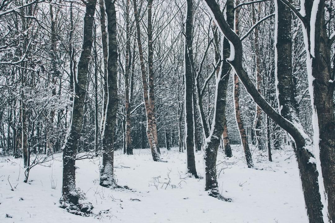 bare trees during winter <b>season</b> photo – Free Nature Image on ...