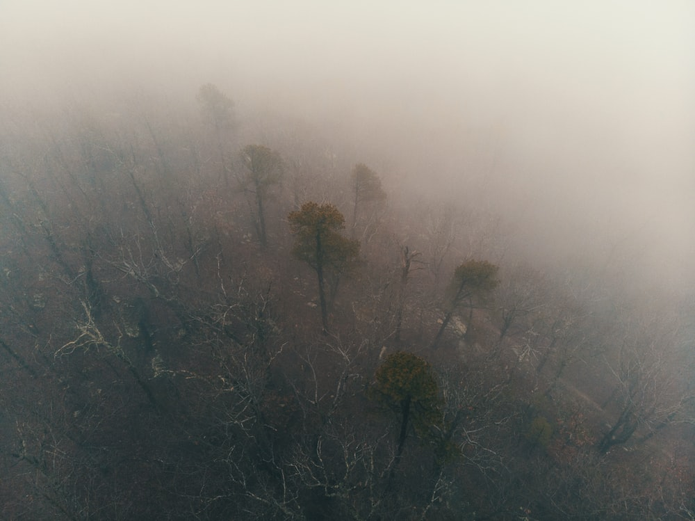 aerial photography of forest on foggy weather