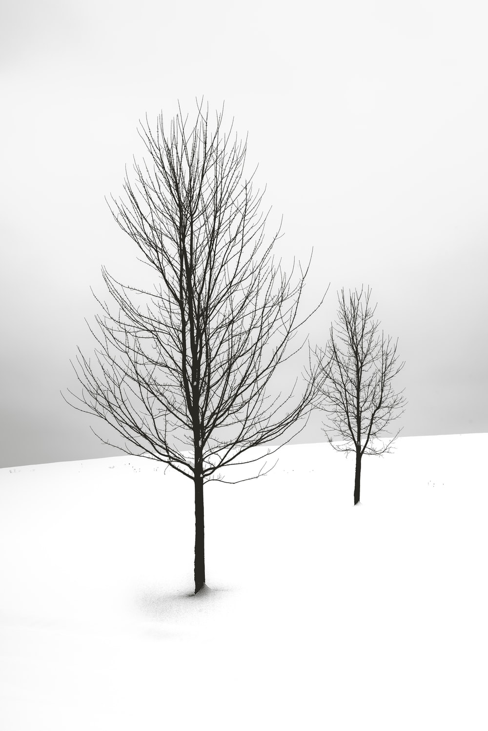 selective focus photography of bare tree