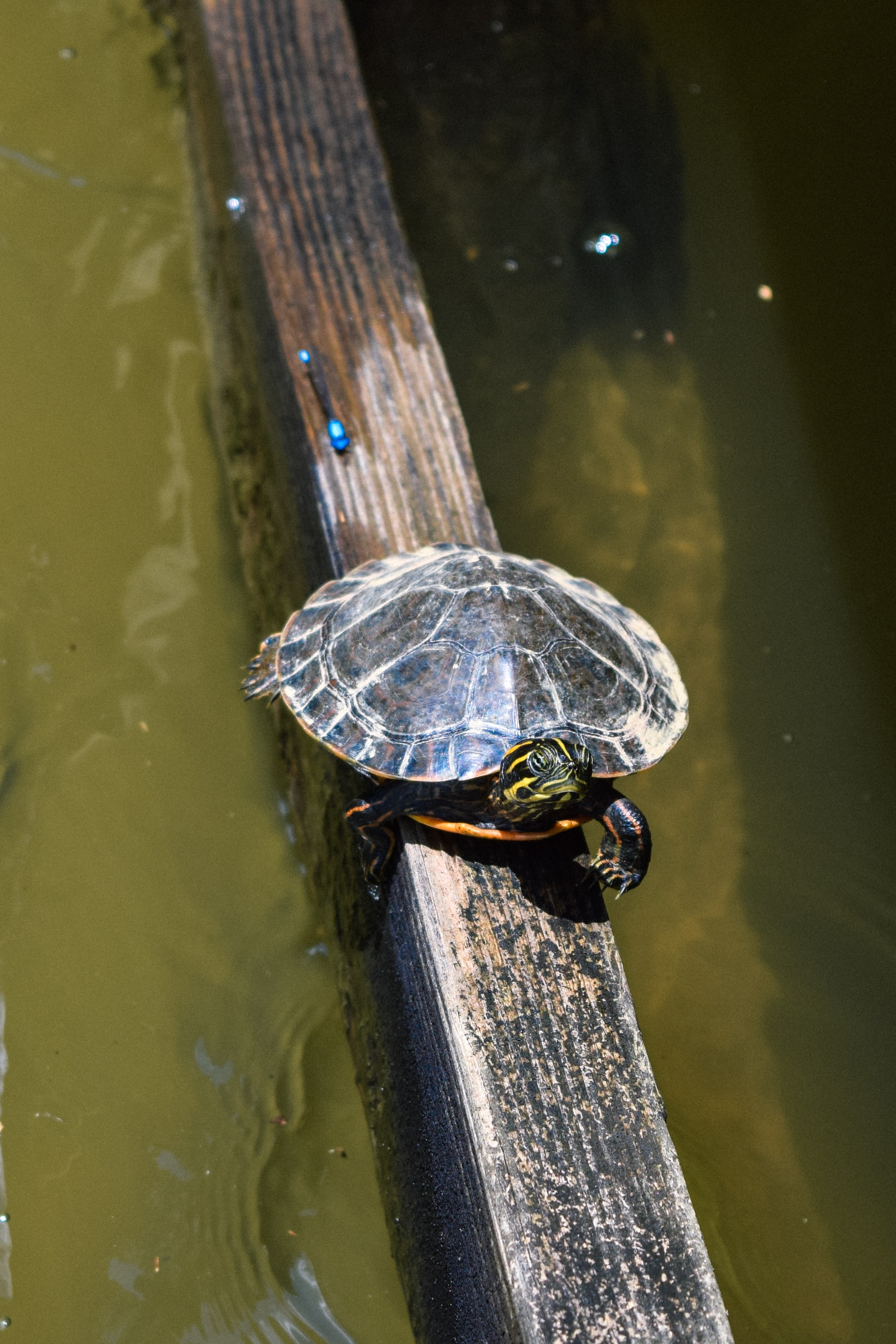 black turtle on wooden surface