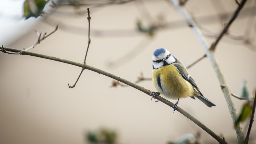 yellow, black, and blue bird perching on branch during daytime