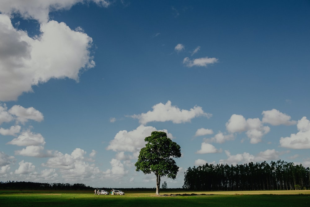 green-leafed tree under blue and white clouds