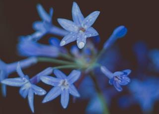blooming blue flowers