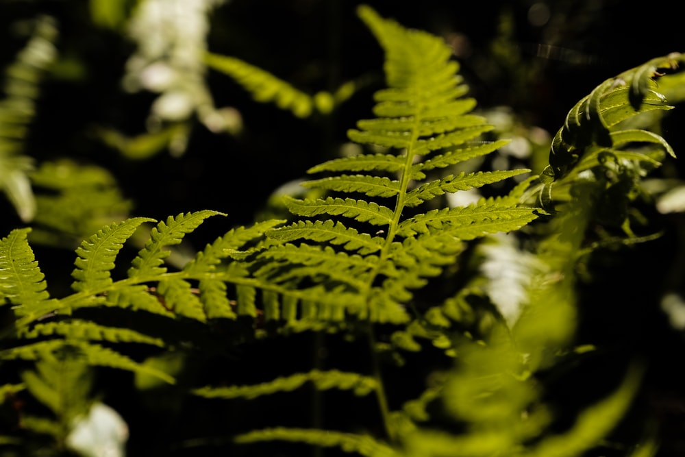 close-up photography of green fern