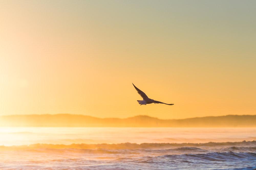 flying bird above sea