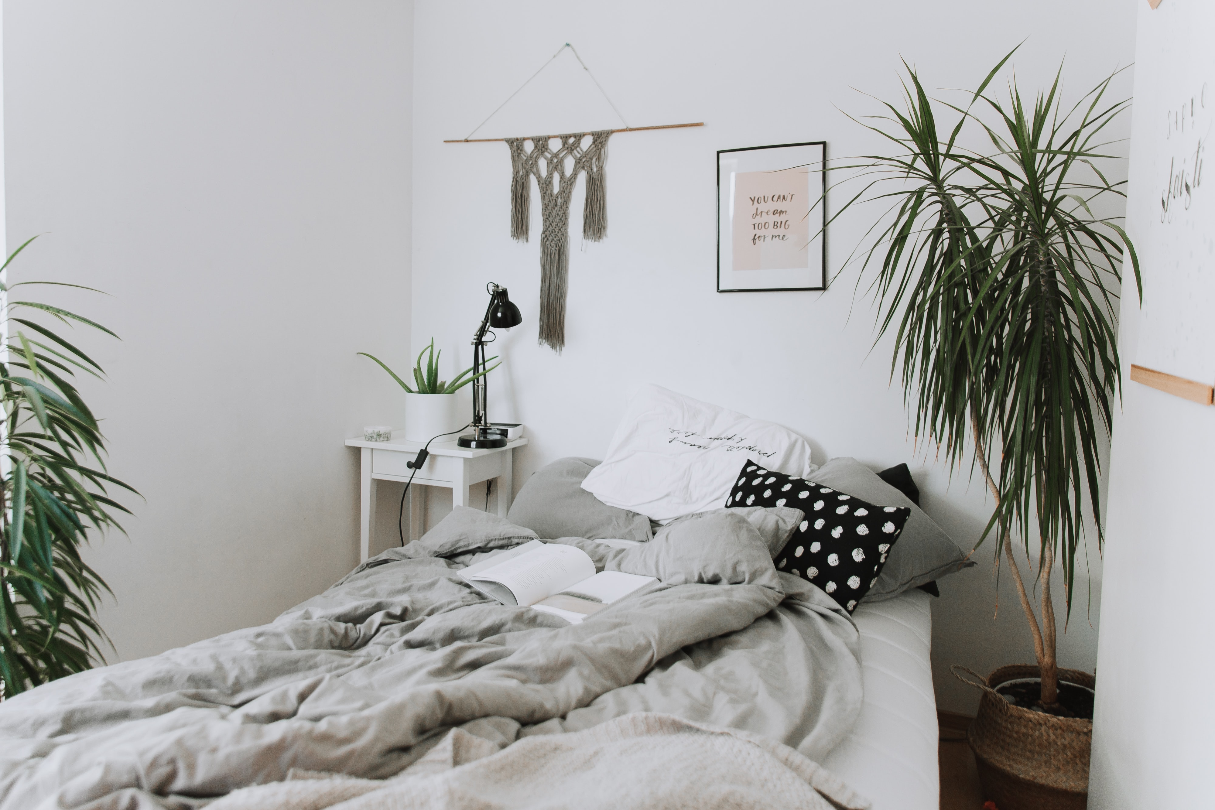 two green indoor plants near gray bedspread