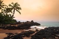 beach cliff near palm trees viewing calm sea