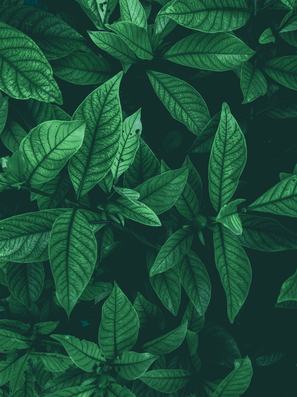 900 Leaf Background Images Download Hd Backgrounds On Unsplash Watercolor illustration of exotics colorful leaves and branch with cute quote. 900 leaf background images download