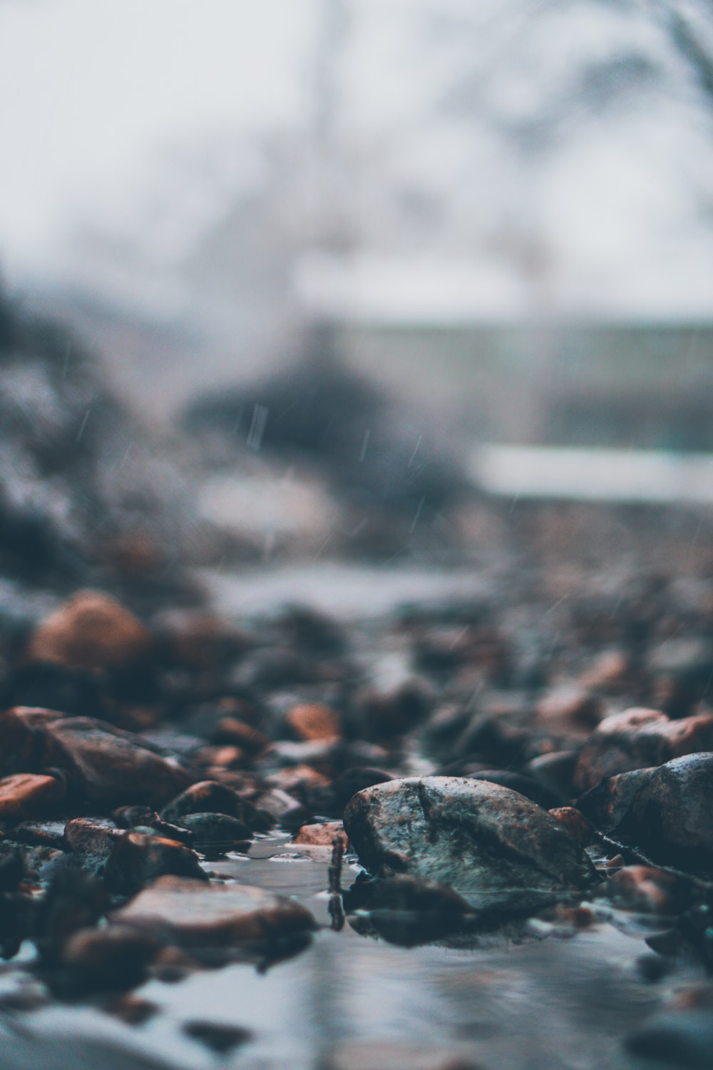 selective focus photography of soaked rocks