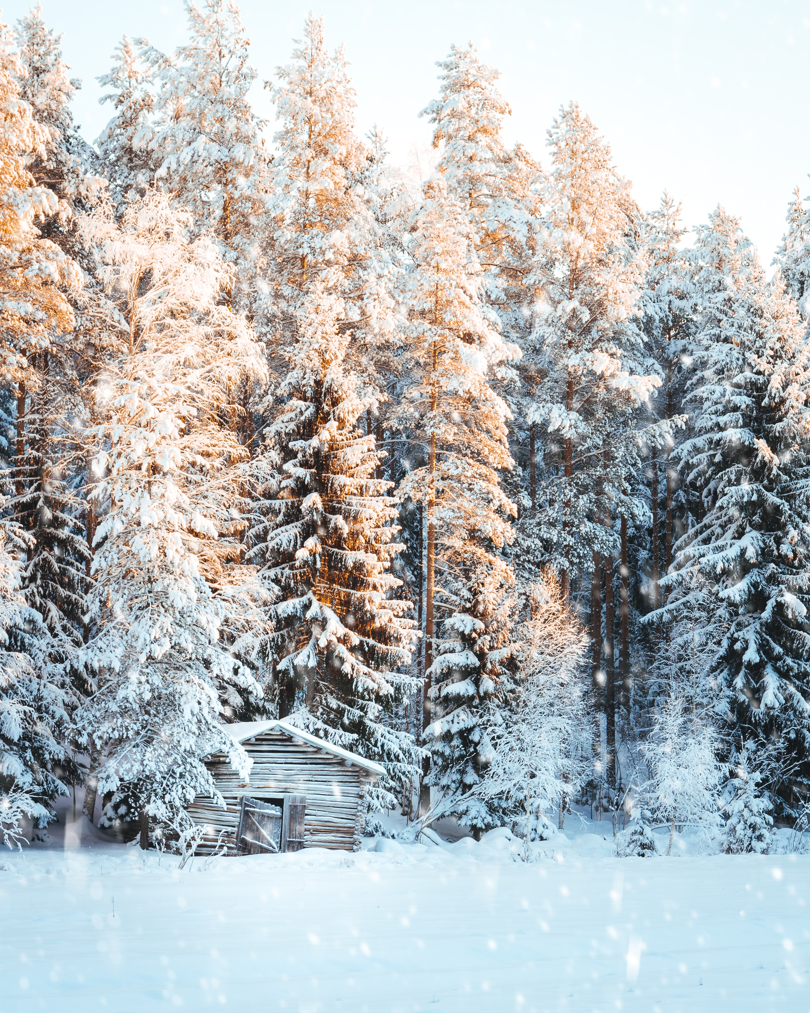 brown wooden cabin near snow covered pine tree forest